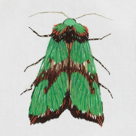 Grüne Motte sticken | über Zur Lila Pampelmuse